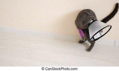 chat, mouvement, patte, bandé, enlever, lent, vétérinaire, ...