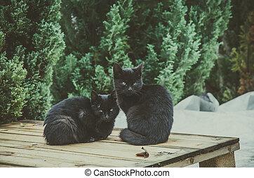 Chat noir lesbienne