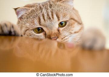 chat, quelque chose, table, essayer, voler, cuisine
