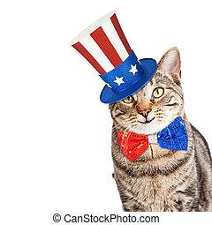 chat, rigolote, patriotique, américain