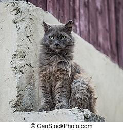 chat, rue, dehors, sale, séance
