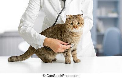 chat, vétérinaire, vérification, hôpital
