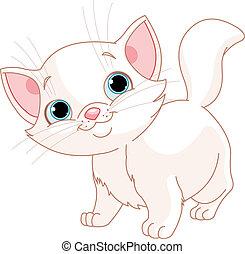 chaton, blanc