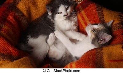 chaton, chaque, panier, adorable, lécher, jouer, autre, ...