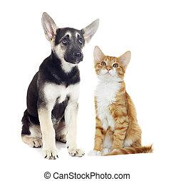 chaton, chiot, regarder