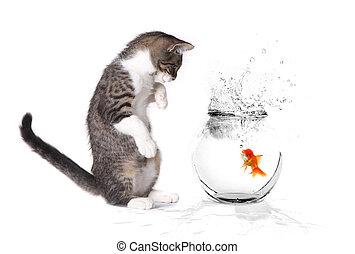chaton, jouer, poisson rouge