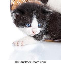 chaton, panier, isolé, blanc