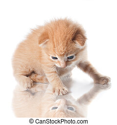 chaton, regarder, sien, reflet, isolé, blanc