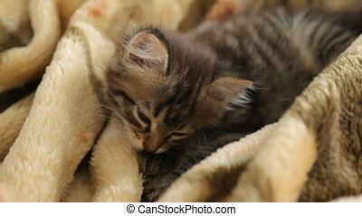 chaton, reposer, peu, couverture