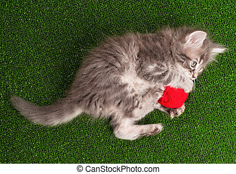 chaton rouge, clew