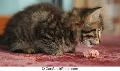 chaton, saucisse, peu, manger