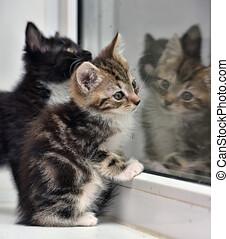 chatons, deux, petit, rebord fenêtre, dehors, regard, ...
