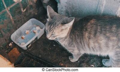 chatons, résidentiel, entre, gris, peau, dalles, sdf, ...