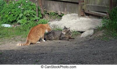 chats, baston