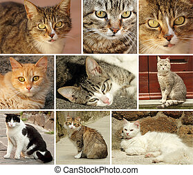 chats, collection, italien