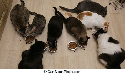 chats, ensemble, beaucoup, manger