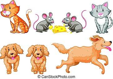 chats, ensemble, chiens