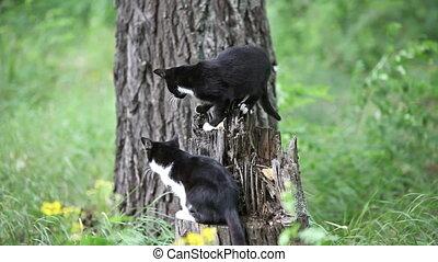 chats, extérieur, noir, deux, jouer