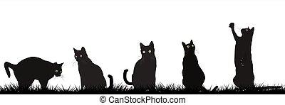 chats, extérieur, noir, jouer