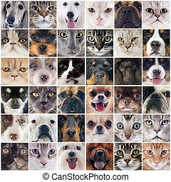 chats, groupe, chiens