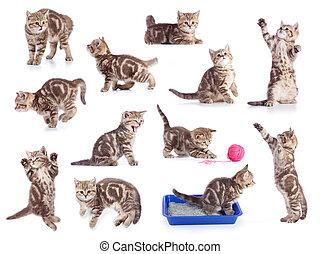 chats, isolé, ensemble