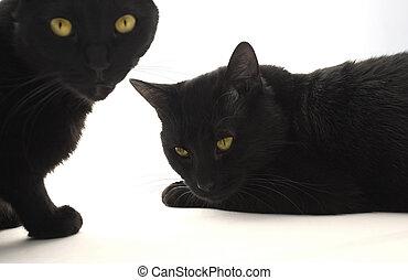 chats, noir, deux
