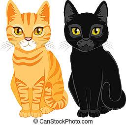 chats, noir, tabby