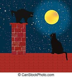 chats, noir, toit