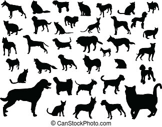 chats, silhouette, chiens