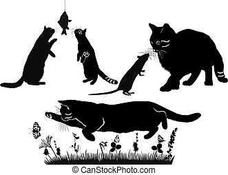 chats, souris