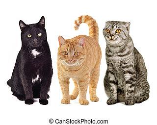 chats, trois, ensemble