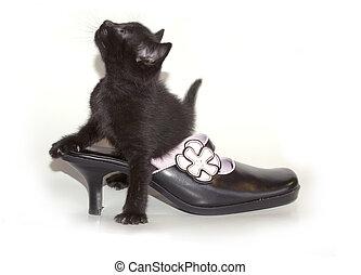 chaussure, chaton