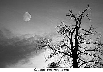 chauve, arbre