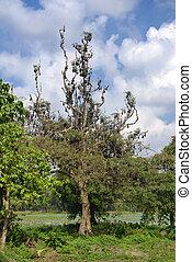 chauve-souris, arbre