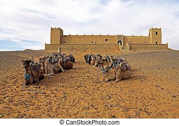 chebbi, モロッコ, 砂漠, エルグ, ラクダ