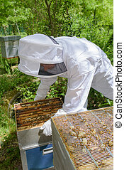 checking the beehives