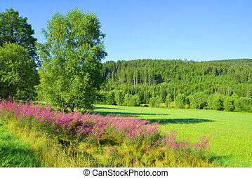 checo, sumava, nacional, republic., parque