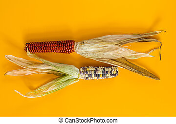 Cheerful and Colorful dried Indian Corn on yellow surface