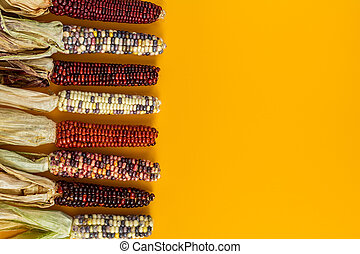 Cheerful and Colorful dried Indian Corn on yellow surface as...