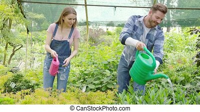 Cheerful couple watering plants in hothouse - Smiling girl...