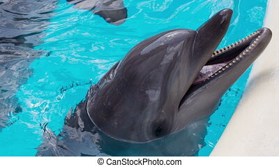 Cheerful Dolphin In The Pool - cheerful dolphin in the...