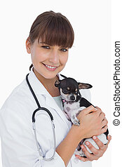 Cheerful female vet holding a cute chihuahua
