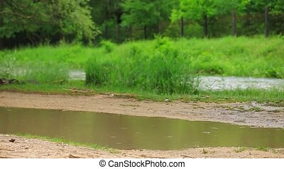 Cheerful Girl Playing In Puddle Near River