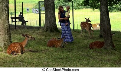 Cheerful mother with daughter girl enjoying roe animals in zoological garden. 4K