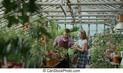Cheerful woman embrace and kiss husband watering flowers with garden pot. Happy young florist couple in apron working in greenhouse