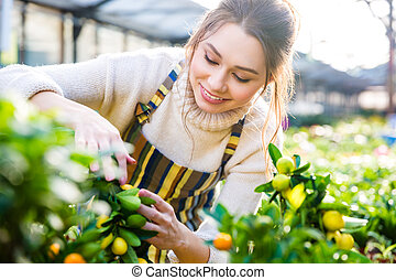Cheerful woman gardener taking care of smal lemon trees