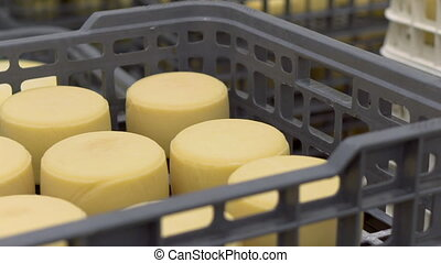 Cheese arranged in boxes at cheese factory warehouse. -...