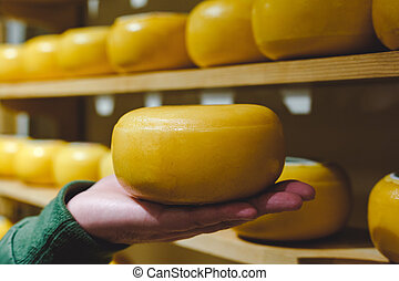 Cheese head in yellow wax on male palm. Man holding a head of round cheese, against the background of cheese warehouse or cheese factory production
