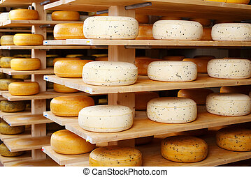 Cheese wheels in factory - Assorted flavours of cheese...