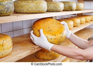 Cheesemaker selects a mature cheese from the shelves of the...
